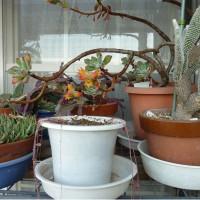 ベランダの植木