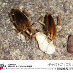 ゴキブリ卵鞘