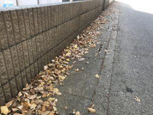 たくさんの枯葉