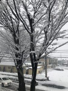 さいたま市の大雪