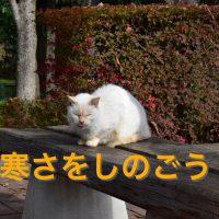 寒さをしのぐ猫